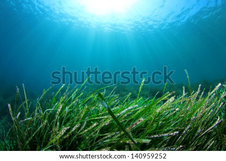 Green Grass Underwater in ocean with Sunburst - stock photo