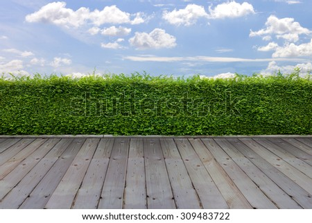 green grass wall on wood,  blue sky background - stock photo