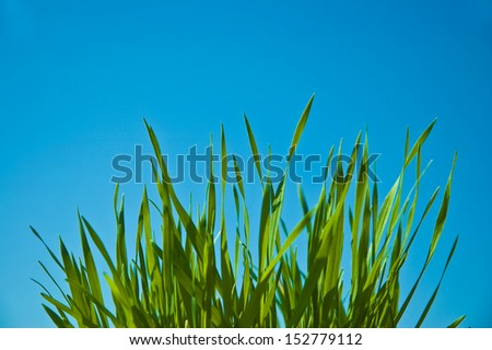 Green Grass with a blue sky - stock photo