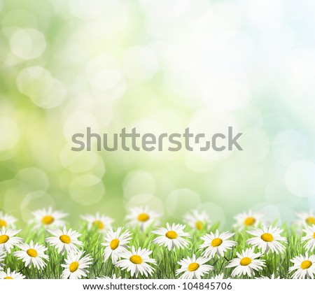 green grass with daisy and ladybug on the left side of the picture. there is blur at the background