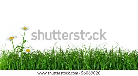 Green grass with daisy flowers isolated on white