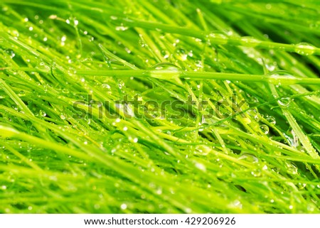 Green grass with dew background - stock photo