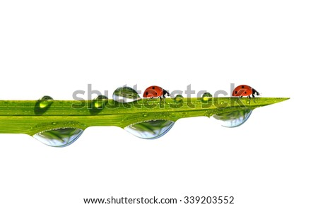 Green grass with dew drops and ladybugs isolated on white background. - stock photo