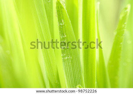 Green Grass with Dew Drops Macro - stock photo
