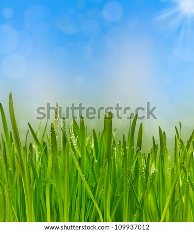 green grass with dew drops on blue sky background