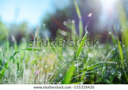 Green grass with dew drops suitable for backgrounds or wallpapers, natural seasonal landscape. Soft Focus.