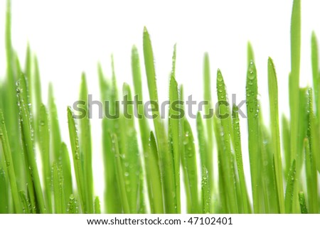 Green grass with drops of a white background - stock photo