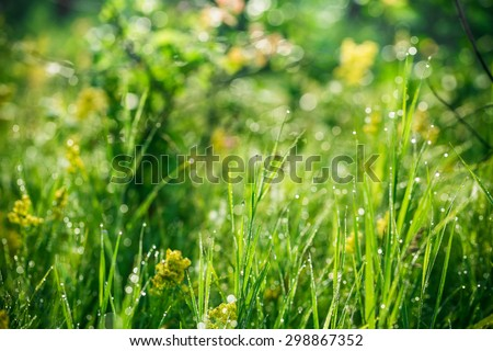 Green grass with drops of morning water. Beautiful summer background with bokeh and blurred background. Low depth of field. - stock photo