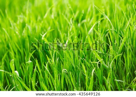 Green grass with drops of water. Nature background