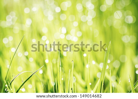 green grass with green bokeh background - stock photo