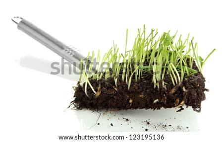 Green grass with ground on paddle isolated on white