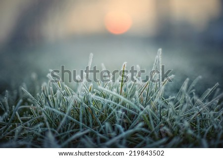 green grass with morning frost and red sun - stock photo