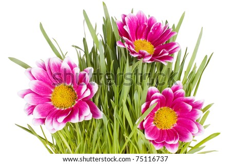 Green grass with pink colours - stock photo