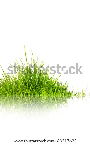 Green grass with reflection isolated on white background. - stock photo