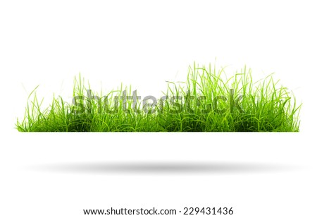 green grass with shadow isolated on white background - stock photo
