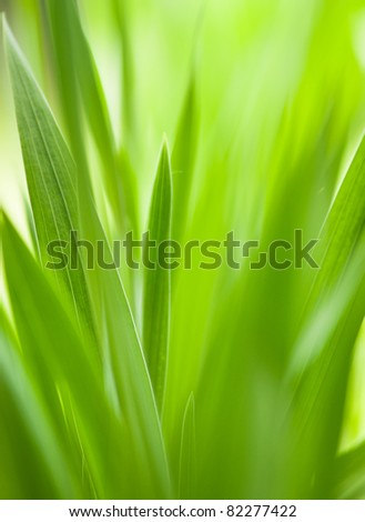 Green grass with shallow DOF.Useful as nature pattern - stock photo