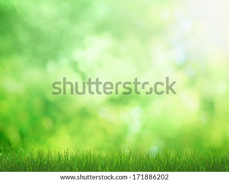 Green grass with sunny nature  - stock photo