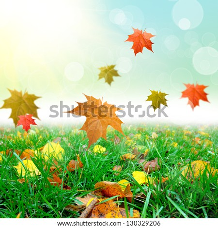 green grass with the autmn leafs - stock photo