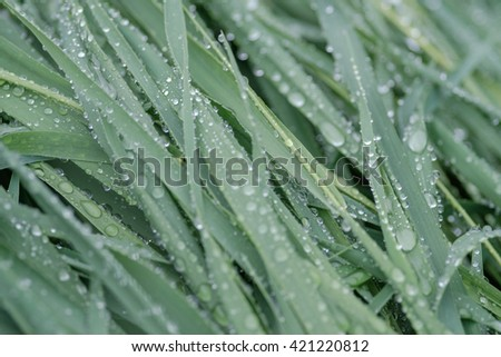 Green grass with water drops after rain. - stock photo