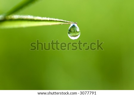 green grass with waterdrop and shallow depth of field - stock photo