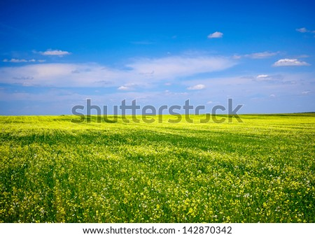 Green grass, yellow flowers and blue sky