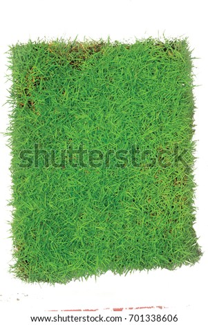 Green Grasses Arena Isolated On White background.