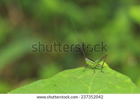 green grasshopper is on green leaf - stock photo
