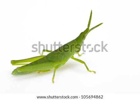green grasshopper isolated on white - stock photo