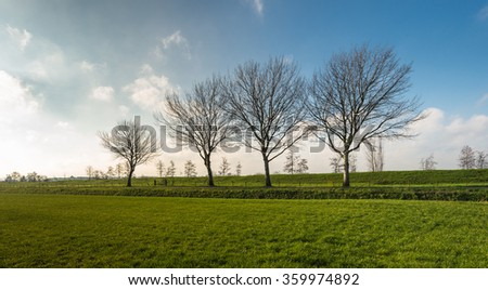 Green grassland in the foreground and in the background an embankment and a row of leafless trees in a Dutch polder landscape. It is at the end of the autumn period. - stock photo
