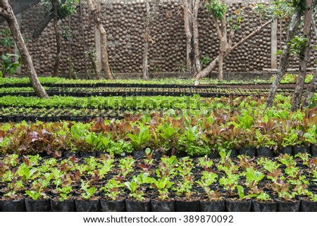 Green healthy farm with different plants - stock photo