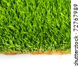 Green healthy grass - stock photo