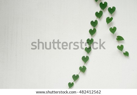 green heart shaped leaves on white wall