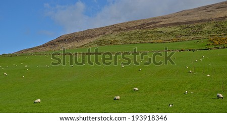 Green hill with sheep spread - stock photo