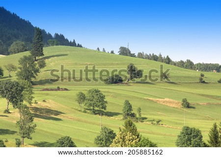 Green hills with trees under mountain