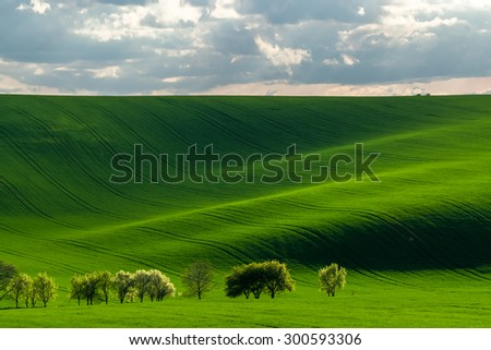 Green hills with young wheat in evening light, agricultural landscape - stock photo