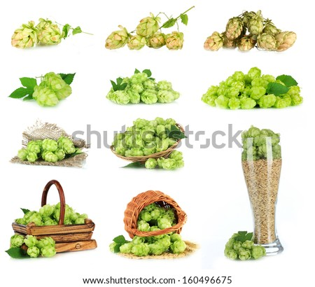 Green hop isolated on white
