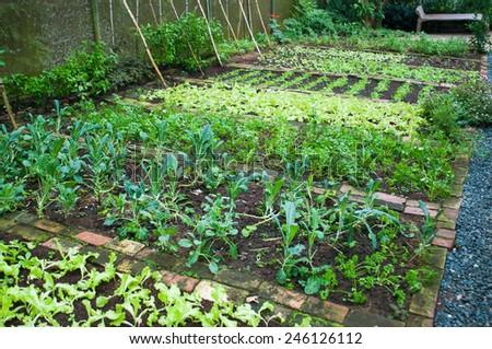 green house garden - stock photo