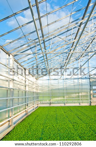 green house interior with plants - stock photo