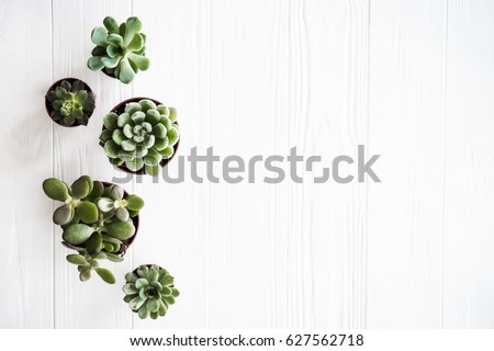 Green house plants potted, succulentson clean white wooden backg