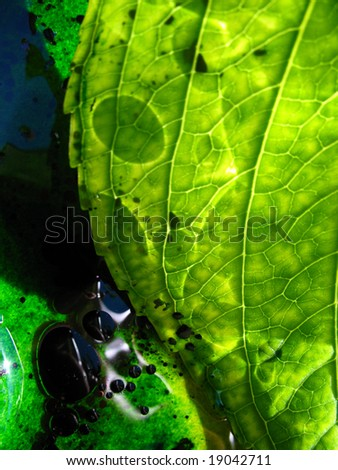 Green hydrangea - stock photo
