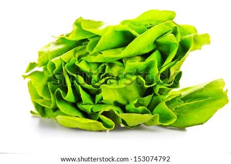 Green hydroponic - stock photo