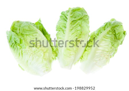 Green Iceberg lettuce on White Background - stock photo
