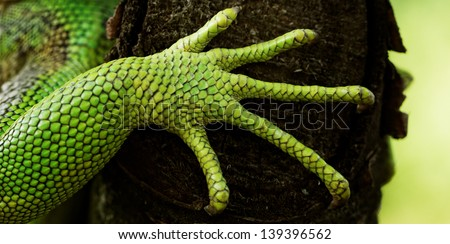 green iguana feet on the tree - stock photo