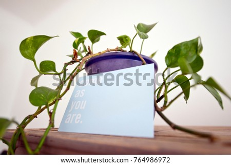 Green indoor plant in a purple plant pot with a welcoming message written on a white card