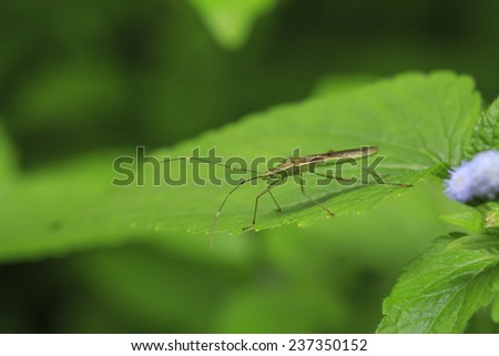 Green  insect is on a green leaf with clear background - stock photo
