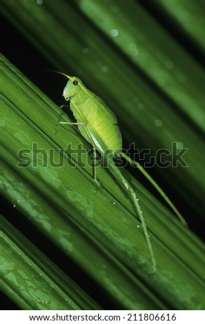 Green Insect on Plant - stock photo
