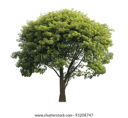 Green isolated tree - stock photo