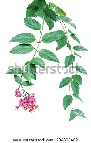 Green ivy and flower plant, nature vine leaves - stock photo