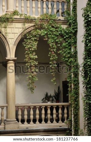 green ivy grows thicker on the wall on the background of the building with balconies - stock photo