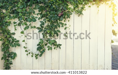 green ivy isolated on white background - stock photo